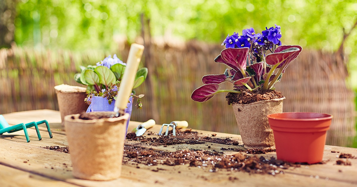 Where to buy cheap house plants in New York City